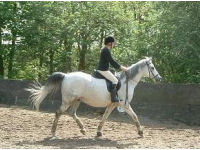 Dressage Experience picture