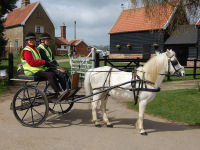 Carriage Driving Experience picture